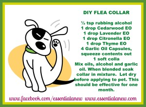 DIY Flea Collar ~ Essential Anew